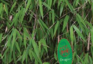 green-dragon2